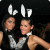 There are cutest bunnies in Bamboo club